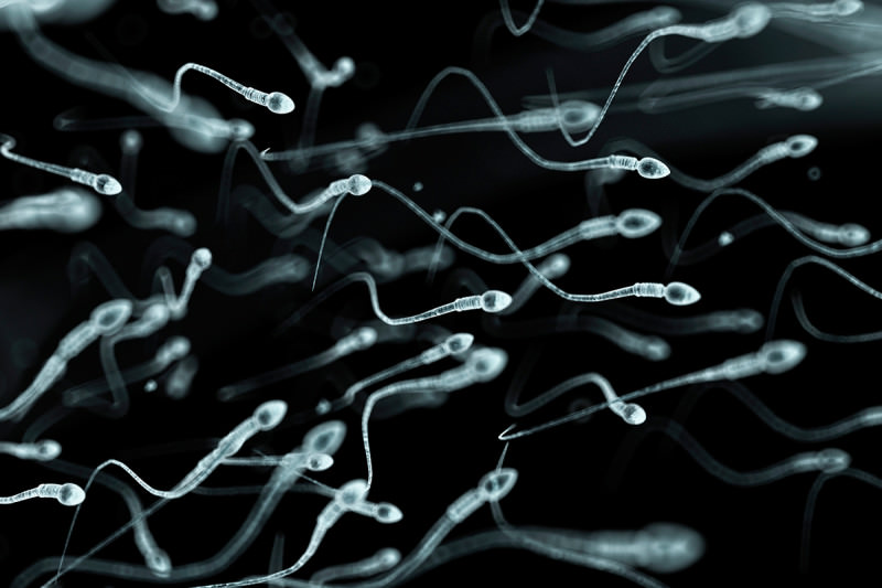 1539627015human_sperm_artwork-spl-800x533.jpg