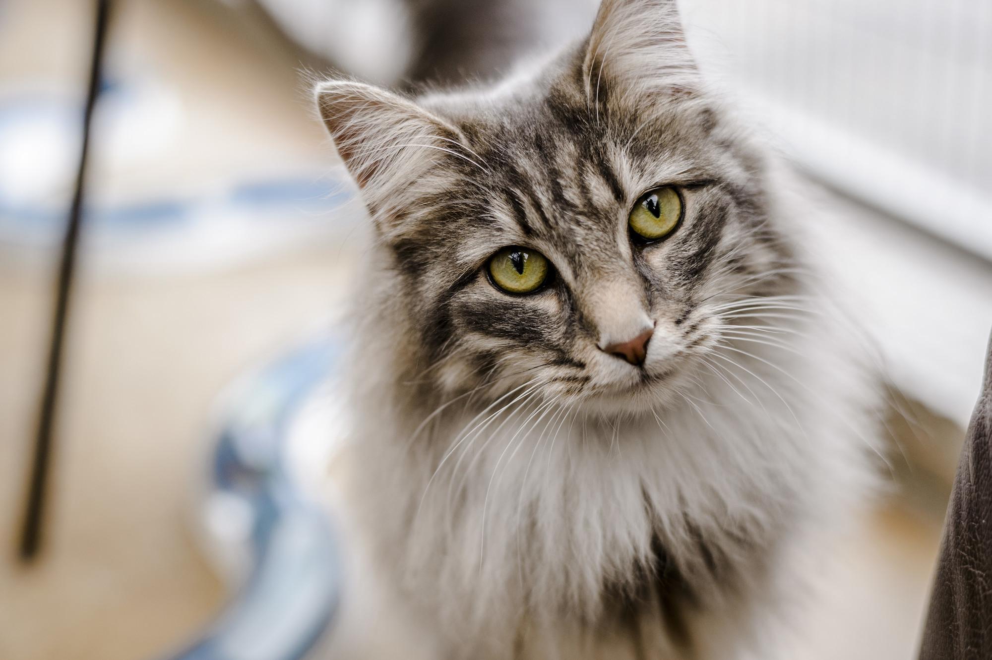 1542569710cats.jpg