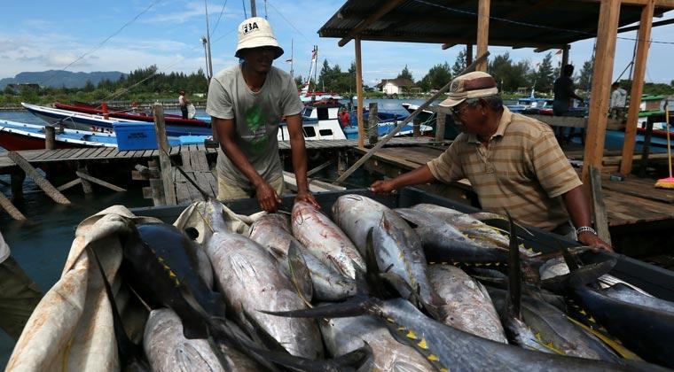 Penghasil Tuna Terbesar, Indonesia Berpotensi Kuasai Pasar Tuna Global