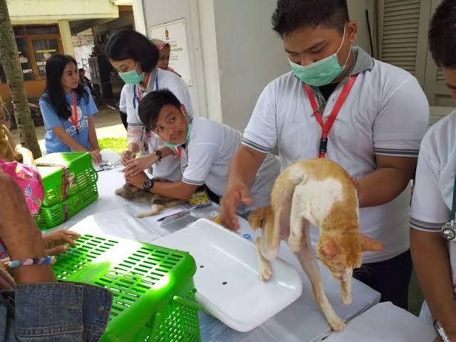 Kreatif, Relawan Prabowo-Sandi Bikin Posyandu Kucing dan Lomba Mirip Bobby