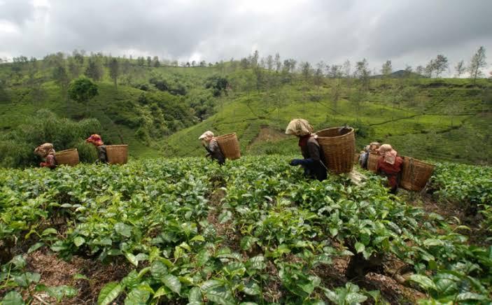 Pengamat Sebut Pentingnya Sistem LAN Antar Instansi untuk Pembangunan Pertanian