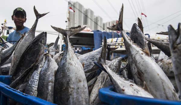 Trend Pasar untuk Industri Olahan Ikan Berubah ke Siap Saji