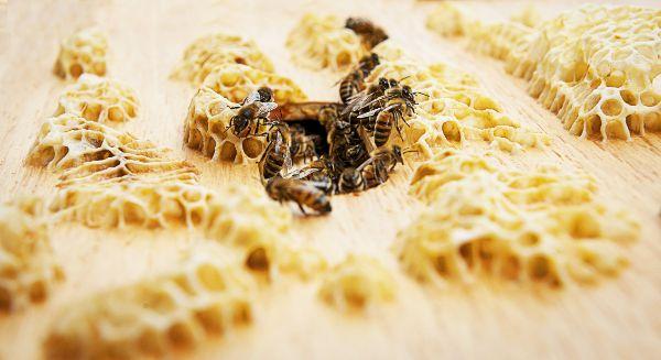 Rolls-Royce Peringati Hari Lebah Sedunia Melalui Proyek Peternakan Lebah di UK